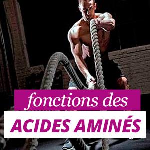 Fonctions des Acides Aminés