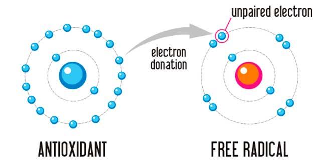 Action des Actioxydants